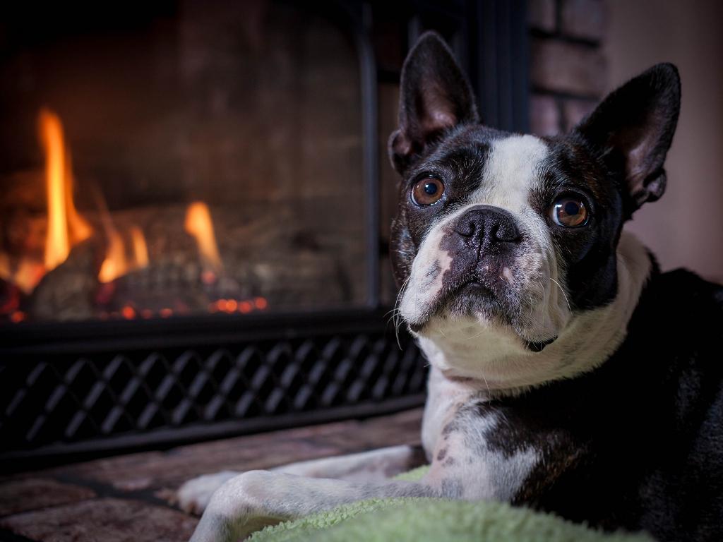 Foto de chimenea con perro deshollinadores de mallorca - Chimeneas en mallorca ...